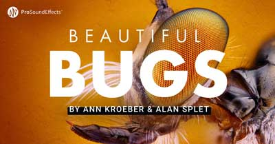 pro sound effects beautiful bugs
